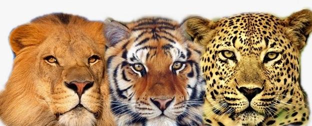 Ragadozó állatok magyarországon